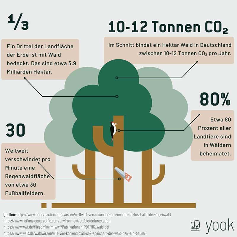 Infografik Wald (von Yook)