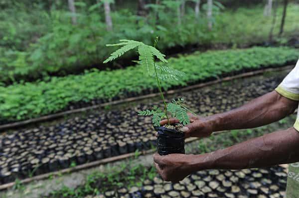Fairventures Waldaufforstungsprojekt auf Borneo 1